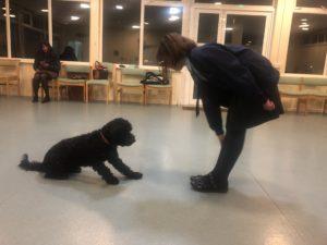 dog training beginner class