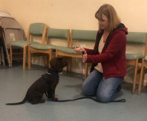 puppy life skills