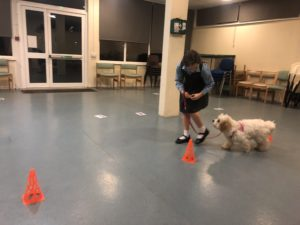 dog training intermediate class